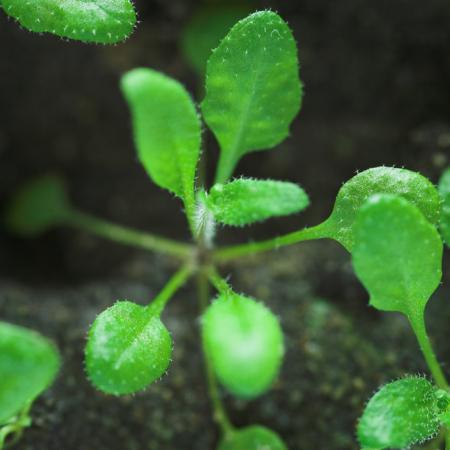 Seedling Plant